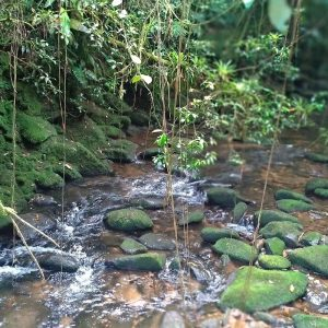 Trilha Pontinha Paranapiacaba, Turismo Paranapiacaba, Trilhas em Paranapiacaba SP, Trilhas São Paulo, Ecoturismo, Olhovivo Paranapiacaba, Paranapia