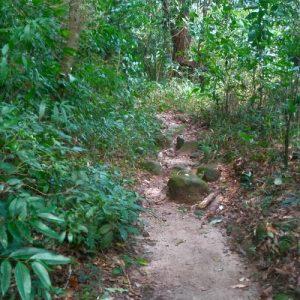 Trilha do Mirante em Paranapiacaba, Turismo Paranapiacaba, Paranapia, Olho Vivo Turismo