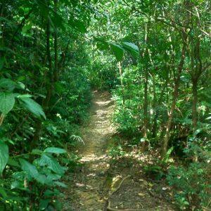 Trilha do Mirante em Paranapiacaba, Paranapiacaba Turismo, Paranapia, Olho Vivo Paranapiacaba