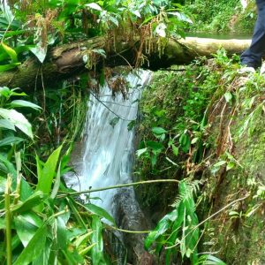 Núcleo Olho Dagua Paranapiacaba, Turismo em Paranapiacaba, Paranapia, Parque das Nascentes Paranapiacaba, Ecoturismo, Turismo Pedagógico, Olho Vivo Paranapiacaba