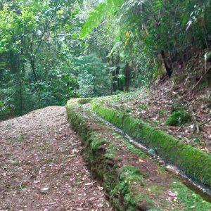 Trilha Núcleo Olho Dagua Paranapiacaba, Turismo em Paranapiacaba São Paulo, Paranapia, Parque das Nascentes Paranapiacaba, Ecoturismo, Turismo Pedagógico, OlhoVivo Turismo