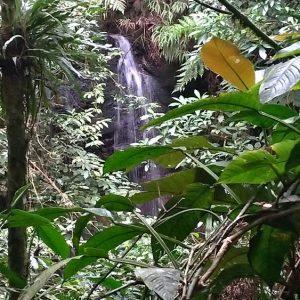 Trilha da Água Fria Paranapiacaba, Trilha Paranapiacaba, Paranapiacaba Turismo, Olho Vivo turismo, Ecoturismo Paranapiacaba, Turismo Pedagógico Paranapiacaba